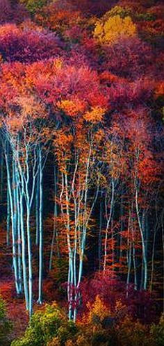 AUTUMN tree -- via: Kristijan Jesenovic -- 500px