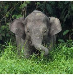 Baby elephant out in the wild