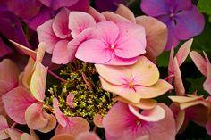 Pastel flower petals