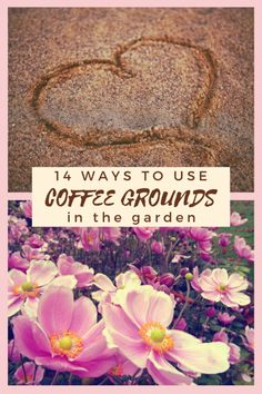 Don't toss those coffee grounds, used coffee grounds can be put to use in your garden in 14 different ways that will help your garden & the planet. Diy Garden Bed, Garden Shop, Garden Art, Coffee Grounds Garden, Uses For Coffee Grounds, Garden Projects, Garden Tools, Acid Loving Plants, Liquid Fertilizer