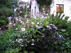 Lindas trädgårdsblogg: Carinas trädgård