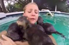 This Clip Of A Woman Swarmed By Baby Otters Will Make Your Day Much Better