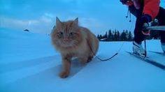 cat picture এর ছবির ফলাফল