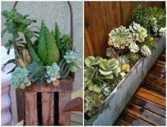 Plant succulent vegetation in wood packing containers Planting Succulents, Wooden Boxes, Crates, Container, Backyard, Exterior, Plants, Packing, Nova
