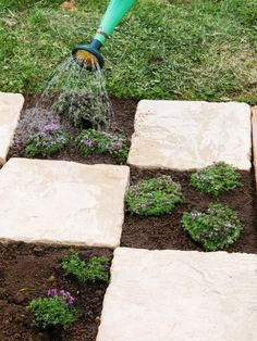 How to Make a Checkboard Patio Garden >> http://www.diynetwork.com/how-to/outdoors/gardening/making-a-checkerboard-patio-garden?soc=pinterest