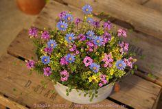 Beautiful Flowers, Miniatures, Garden, Plants, Ideas, Growing Plants, Gardens, Flowers, Garten