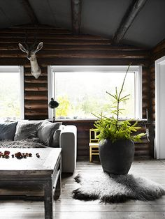 Living room in Nordic style with sofa and large potted plant