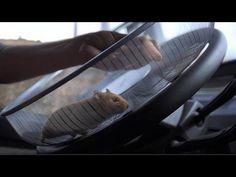 Hamster Drives Volvo Truck Up Mountainside - http://www.creativeguerrillamarketing.com/viral-marketing/hamster-drives-volvo-truck-mountainside/