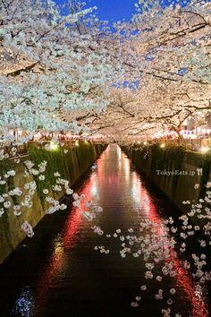 Cherry Blossoms — Ohanami 2014 | Tokyo Eats.  BEAUTIFUL