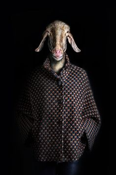 sheep - photographer Miguel Vallinas