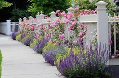 White Picket Fence, Purple Plants, Pink Roses  Gates and Fencing  Landscaping Network  Calimesa, CA