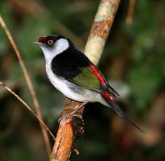 In the Atlantic Forest, Brazil.  Check out this year birding tours at http://www.birdingbraziltours.com/