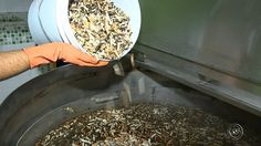 Ideia desenvolvida em Votorantim (SP) fez com que a cidade tenha a primeira usina de reciclagem de bitucas no mundo.