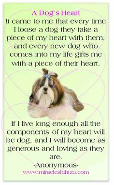 A Dog's Heart More at http://miracleshihtzu.com