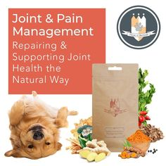 For highly effective relief from joint pain, arthritis & movement discomfort. Pomchi Puppies, Pomeranian Chihuahua Mix, Stop Puppy From Biting, Puppy Biting, Green Lipped Mussel, Pet Health, Health Care, Arthritis Pain Relief, Cute Dog Pictures