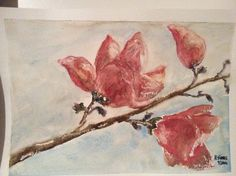 Magnolia watercolour by Katherine Ferris, Sydney Wellbeing Centre