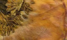Parchment and Pollen