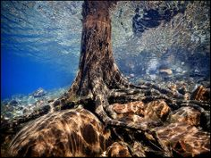 tree of life roots in eden's pool Ontario Parks, Hiking Places, G Adventures, Crystal Clear Water, Travel Hacks, Oh The Places You'll Go, Wonderful Places, Parka, Natural Beauty