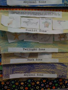 The Ocean Zones - foldable booklet Science Classroom, Teaching Science, Teaching Habitats, Science Fun, Classroom Themes, Teaching Ideas, Science Lessons, Science Projects, Ocean Lesson Plans