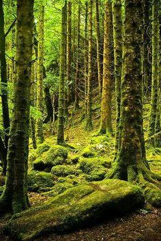 Mossy forest... Killarney, Ireland