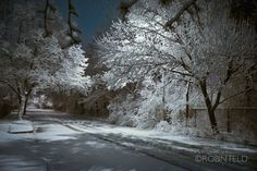 Category » Photography - Robin Feld PhotographyNature « – Dayton ...