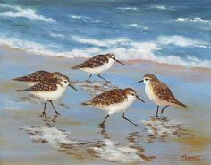 Sandpipers Painting by Barrett Edwards - Sandpipers Fine Art Prints and Posters for Sale Watercolor Bird, Watercolor Paintings, Bird Paintings, Watercolors, Beach Paintings, Acrylic Paintings, Bird Artwork, Beach Artwork, Shorebirds