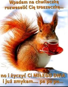 Good Morning Inspiration, Motto, Elf, Humor, Funny, Animals, Animated Emoticons, Therapy, Cheer