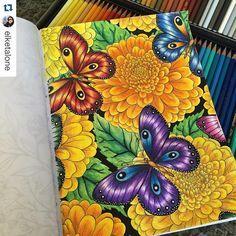 "53 Likes, 6 Comments - Coolorindo (@coolorindo) on Instagram: ""Flores e borboletas #Repost @elketalone with @repostapp. ・・・ #coolorindo #livrodecolorir…"""