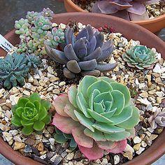 14 Plantas para Jardineiros Iniciantes - Jardineiro.net