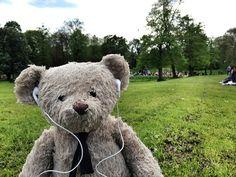Bear in the park