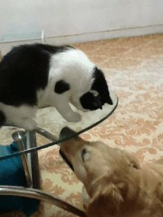 Alaruine see what's new today ?: cute dog and cat