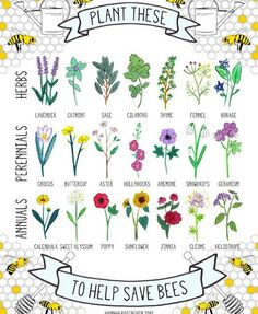 Please share this far and wide! #savethebees #seedles