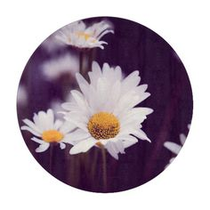 Camomile dreams cutting board, customized, personalized, zazzle, photo, photography, artwork, buy, sale, gift ideas, camomile, flowers, divination, love, violet, purple, liliac, white, dreams, bright, colorful, glow, petals, dark, daisies