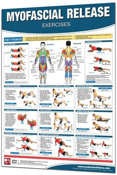 Trigger Point and Myofascial Release Exercise Posters are a visual guide for identifying the tissues that surround and support the muscles of the body, and then performing self-myofascial release techniques as physical therapy to improve flexibility, muscle function and performance, and reduce pain and injuries.