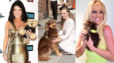Happy National Dog Day! See Britney Spears', Lisa Vanderpump's and 50 Cent's Dogs on Twitter