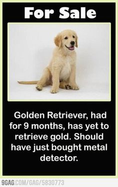 Its a waste of money so now that all your money is gone let us help  http://www.FinancialAcceptanceCorporation.com  or if you sell the puppy we will finance it :)
