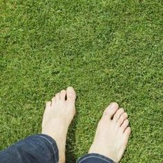 use Epsom salts as a lawn fertilizer, they can be applied using a spreader, which ensures even distribution, or diluted in water and sprayed on grass. For every 100 square feet of lawn, the Dirty Doctor recommends applying half a pound of Epsom salts over the lawn using the spreader. Alternately, combine 1 ounce of Epsom salts with a gallon of water, blend thoroughly, and use a mister to treat the lawn with the mixture.