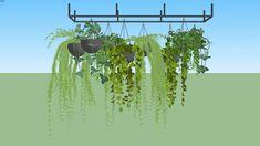 Vegetação pendente | 3D Warehouse Sketchup Model, 3d Warehouse, Sustainable Design, Sustainability, Tropical, Photoshop, Herbs, Architecture, Plants