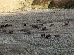 Herd of deer Cairngorm National Park Scotland