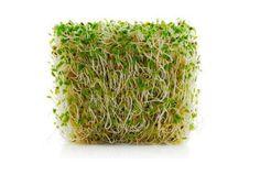 Faire germer des graines... sans germoir ! - Ecologirl