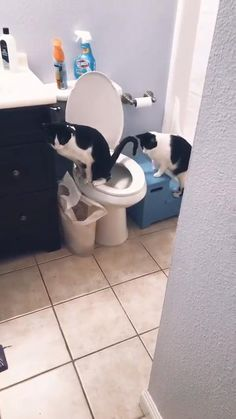 Well done : Funny Animal Videos, Cute Funny Animals, Funny Animal Pictures, Animal Memes, Cute Baby Animals, Funny Dogs, Funny Memes, Cute Cats And Kittens, I Love Cats