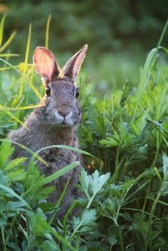 Like a rabbit caught in the headlights? Photography by Heather Cameron, via her blog 'A Day in the Country'.