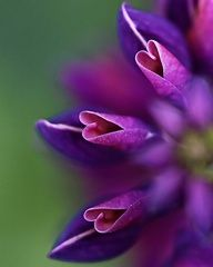 a purple flower that says love.