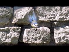 Sinitihaste pesa - YouTube Mount Rushmore, Youtube, Nature, Travel, Birds, Weights, Naturaleza, Viajes, Destinations