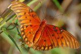 the world of Beautiful Butterflies