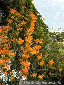 Faire refleurir une orchid e fiches conseils jardinage plantes d 39 in - Plantes grimpantes croissance rapide ...