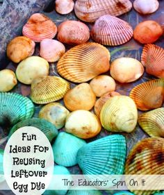 Dying shells instead of eggs! And more beachy Easter Ideas: http://www.completely-coastal.com/2014/04/nautical-easter-eggs-easter-shells.html