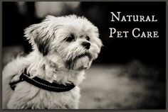 Natural Pet Care : Natural pet care is a likely progression for people making the switch to a natural, sustainable lifestyle. This article was written to help you get started.