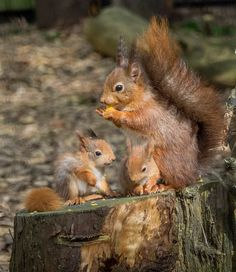 Cute Funny Animals, Cute Baby Animals, Funny Cats, Amazing Animal Pictures, Beautiful Pictures, Squirrel Pictures, Black Cat Tattoos, Photo Animaliere, Cute Squirrel