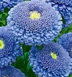 blue garden - Google'da Ara